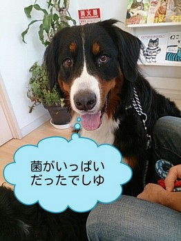 DSC_201510033.jpg
