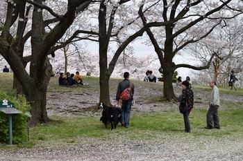 SO_160408_昭和記念公園_037.jpg