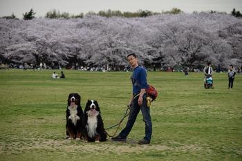 SO_160408_昭和記念公園_126.jpg