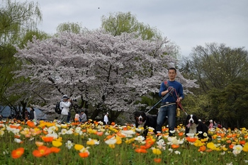 SO_160408_昭和記念公園_153.jpg