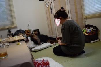 SO_160828_シーちゃん家訪問_061.jpg