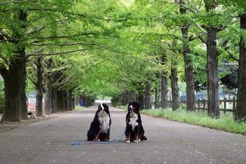 SO_161013_昭和記念公園_102.jpg