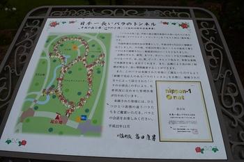 SO_170524_鴻巣ポピー_050.jpg