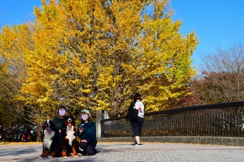 SO_171117_昭和記念公園_020.jpg