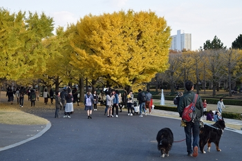 SO_171117_昭和記念公園_086.jpg