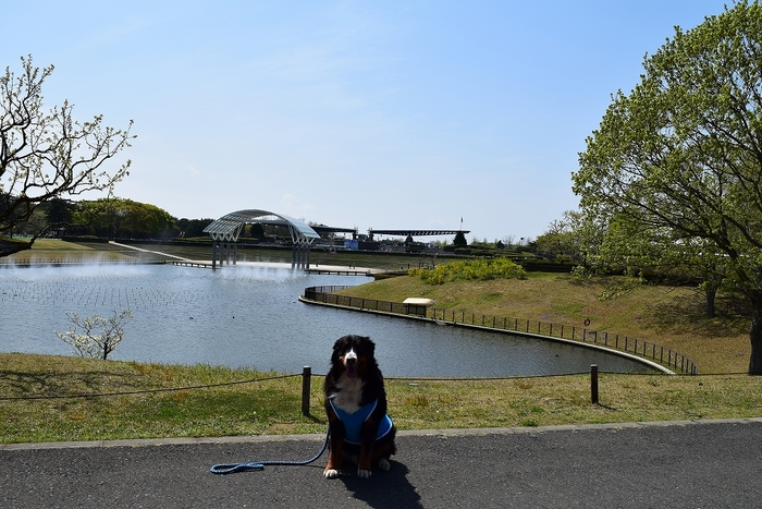 SO_180412_ひたちなか海浜公園_021.jpg