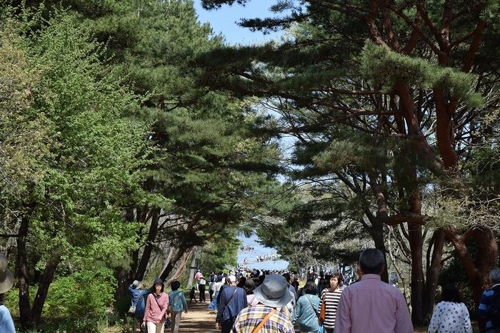SO_180412_ひたちなか海浜公園_026.jpg