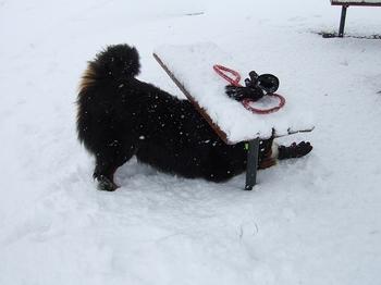 SO_2012-0229ベルナーと雪0011.jpg