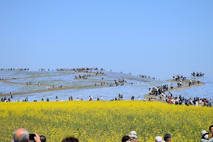 SO_180412_ひたちなか海浜公園_027.jpg